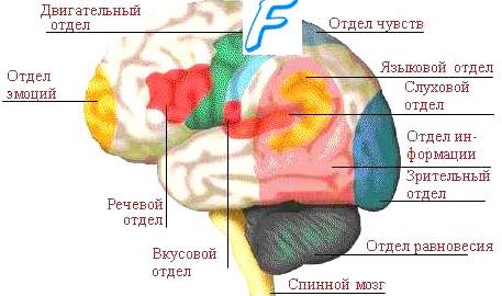 Последствия инсульта зависит от места кровоизлияния в мозге